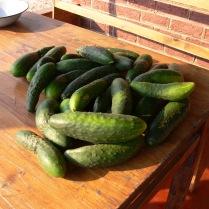 28 Cucumbers